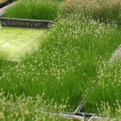 HAIRGRASS MAT - Click for more info