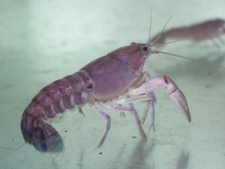 YABBY - Click for more info