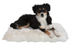 SHEEPSKIN CUSHION 45X45CM WOOL-WHITE - Click for more info