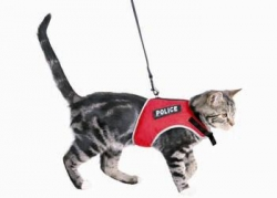 XCAT HARNESS W/ELAS LEAD - Click for more info
